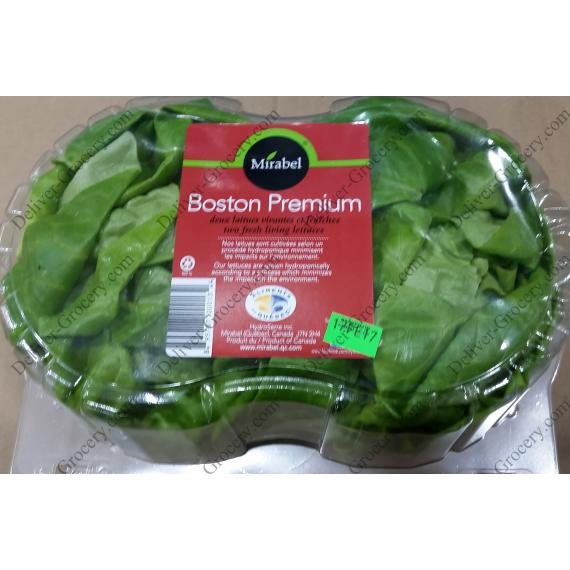 Mirabel Boston Premium Two Fresh Living Lettuces,